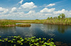 A small pond with lily pads on the Anhinga Trail in the Everglades National Park, Florida. USA.