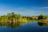 Grasslands and bogs of the Florida everglades, USA.