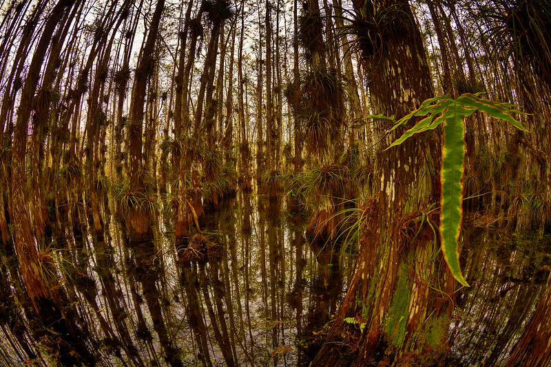 Cypress Dome