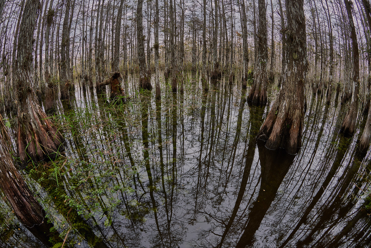 Cypress Dome reflections