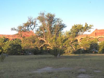 Dry Tortugas plants