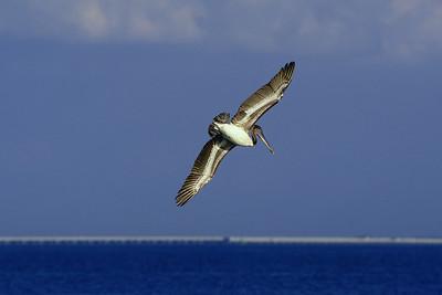 pelican banking