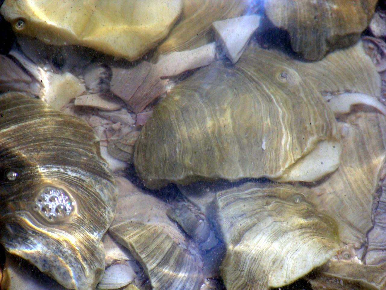 Underwater Shells