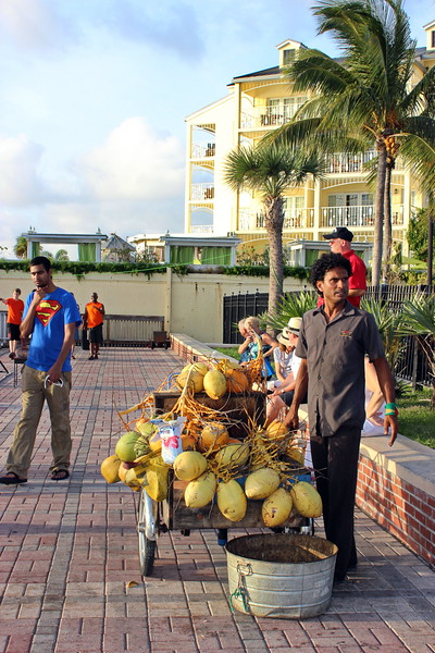 Selling Coconuts and Coconut Milk