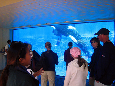 Sea World Orlando VIP Tour