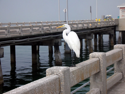 17  Fishing Pier -  Sunshine Skyway Bridge