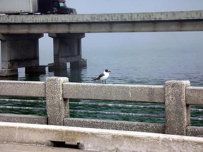 14  Fishing Pier -  Sunshine Skyway Bridge