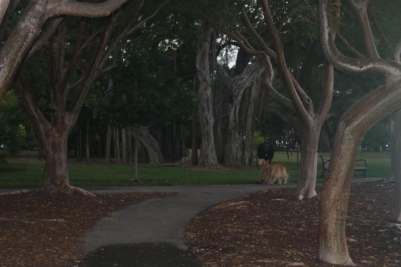 Dog Among the Banyon Trees