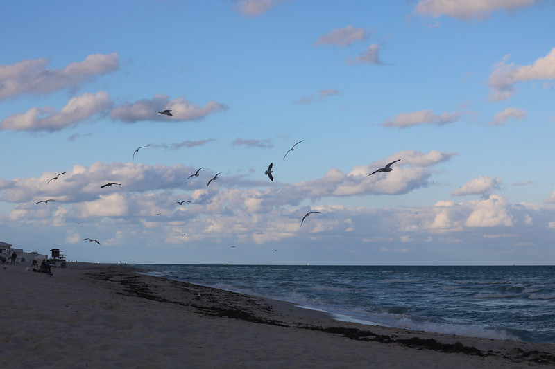 Seagulls Flock at Dusk