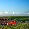 plough in sugar cane field