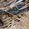 baby alligator full length