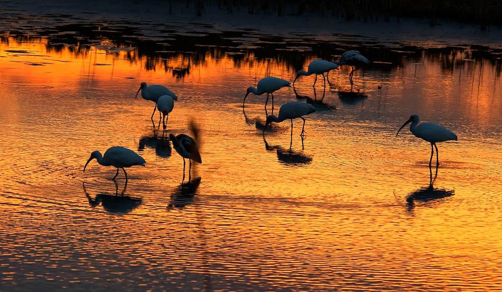 Ibis and Sunset