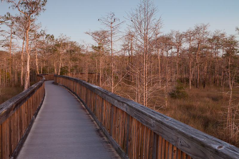 Dusk at Big Cypress National Preserve, FL<br /> <br /> FL-111230-0071