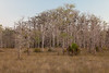 Grasses and treeline in Big Cypress National Preserve. FL<br /> <br /> FL-111230-0045