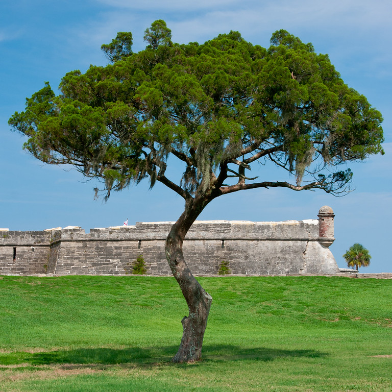 A lone tree stands in the grassy field near the San Marcos Fort. St. Augustine, FL<br /> <br /> FL-080624-0165