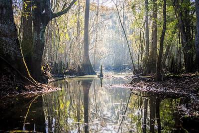 Santa Fe River Swamp HDR