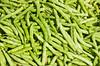 Closeup of edible beans in a shipping crate near Homestead, Florida, USA.