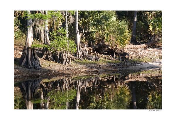 Florida Nature 2007
