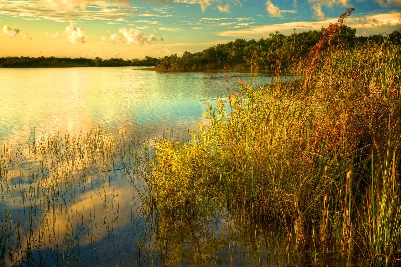 Sunrise Sweet Bay Lake - Everglades National Park # 4