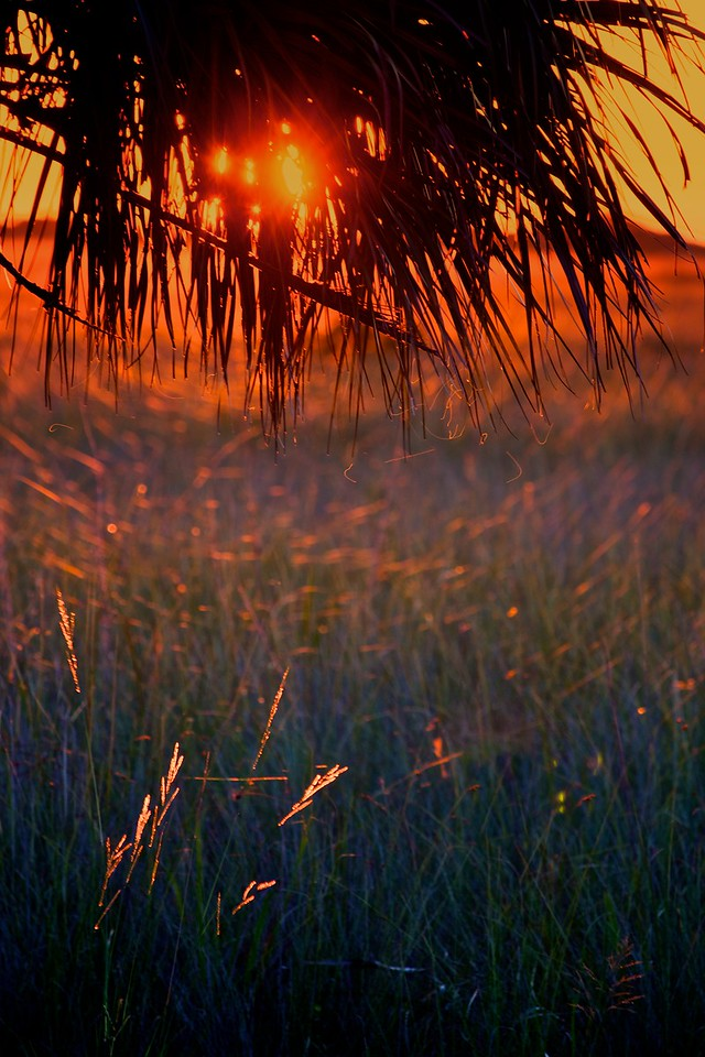 Sunset and Palm and Grass