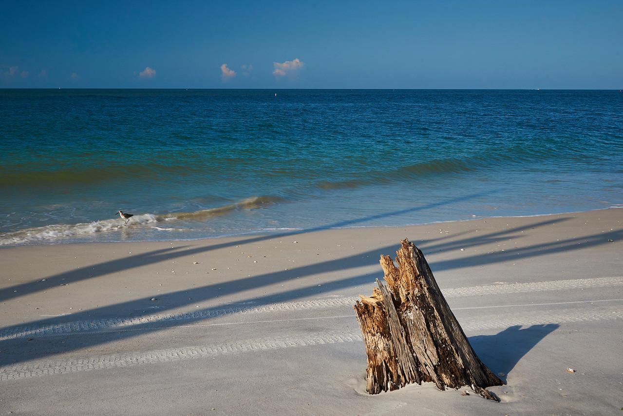 Sandpiper and stump