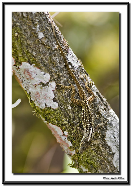 Lizzard on a tree