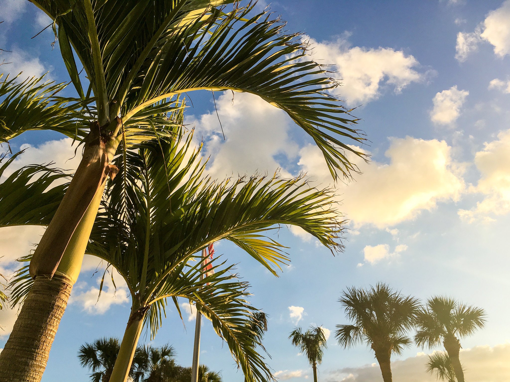 snapping photos of palm trees are another one of the coolest things to do in marco island