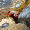 Crab at Haulover Cut