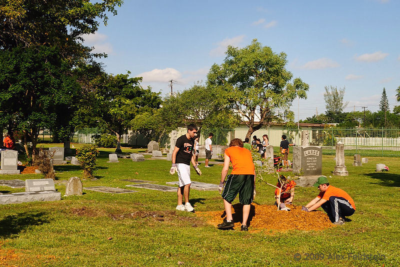 Tree planting day at the cemetery