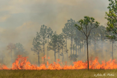 Prescribed fire 7