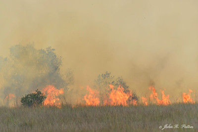 Prescribed fire 4