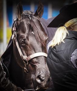 Quarter Horse Show 2017