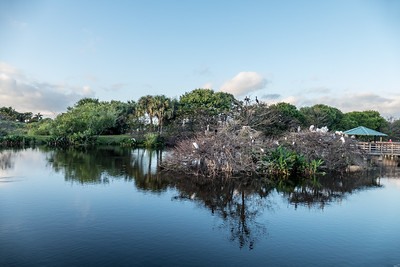 Busy Roost, Wakodahatchee Wetlands, Florida