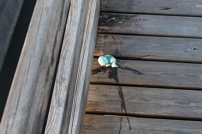 Uh oh, Wakodahatchee Wetlands, Florida