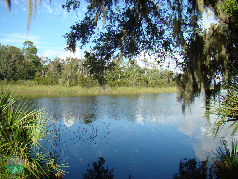 A view of the Salt River in Ocala from the shore along the way.