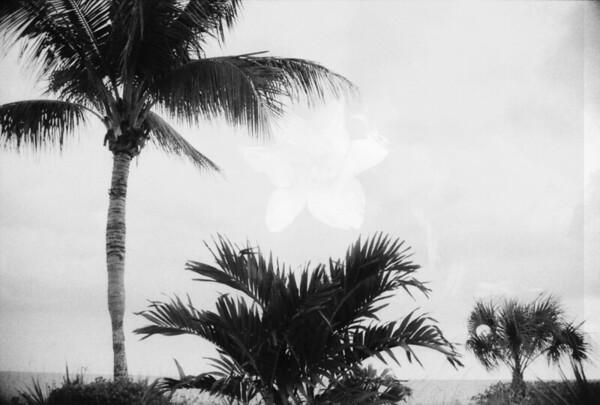 Sanibel Island in Black and White
