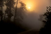 Sunrise-OcalaNF-9-11-19-SJS-001