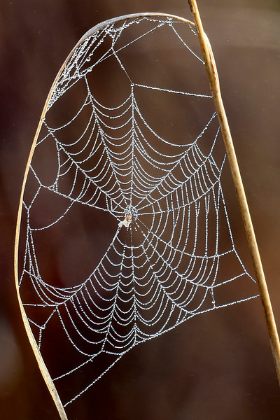 Cobwebs-PineMeadowsCA-2-11-19-SJS-001