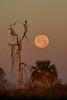 Moonset&Hawk-LAWD-1-21-19-SJS-002