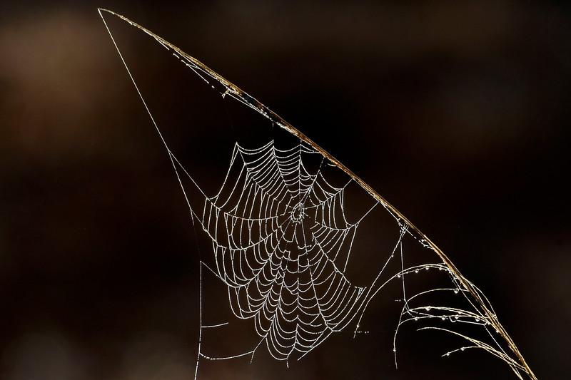 Cobwebs-PineMeadowsCA-2-11-19-SJS-008