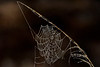 Cobwebs-PineMeadowsCA-2-11-19-SJS-008