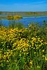 BurMarigolds-EmeraldaMarshFL-11-18-18-SJS-014