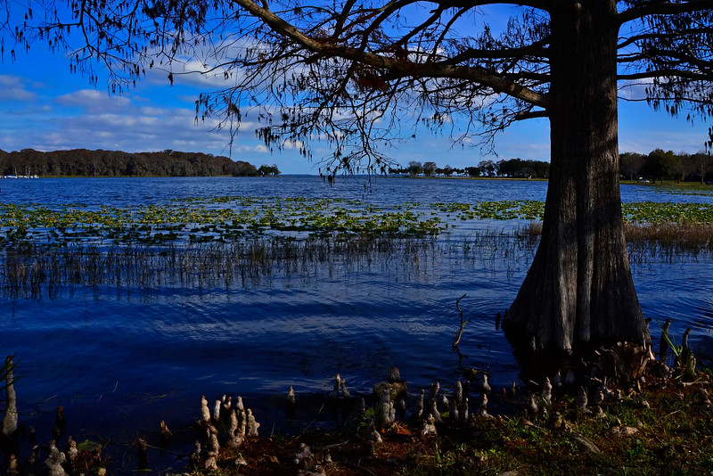 LakeHarrisLakeCoFL-2016-SJS-01
