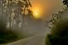 Sunrise-OcalaNF-9-11-19-SJS-002