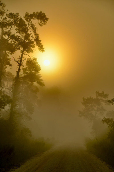 Sunrise-OcalaNF-9-11-19-SJS-004