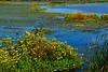 BurMarigolds-EmeraldaMarshFL-11-18-18-SJS-002