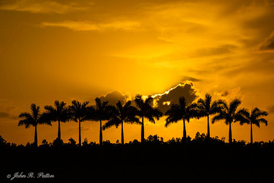 Royal Palm sunset