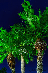 Night palms