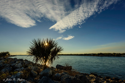 Palm before sunset, Sebastian Inlet.