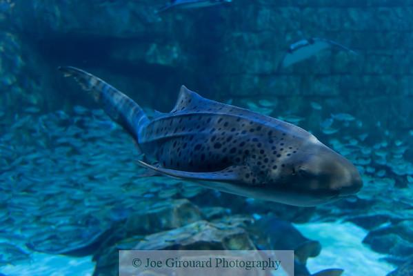 20201 SeaWorld Orlando